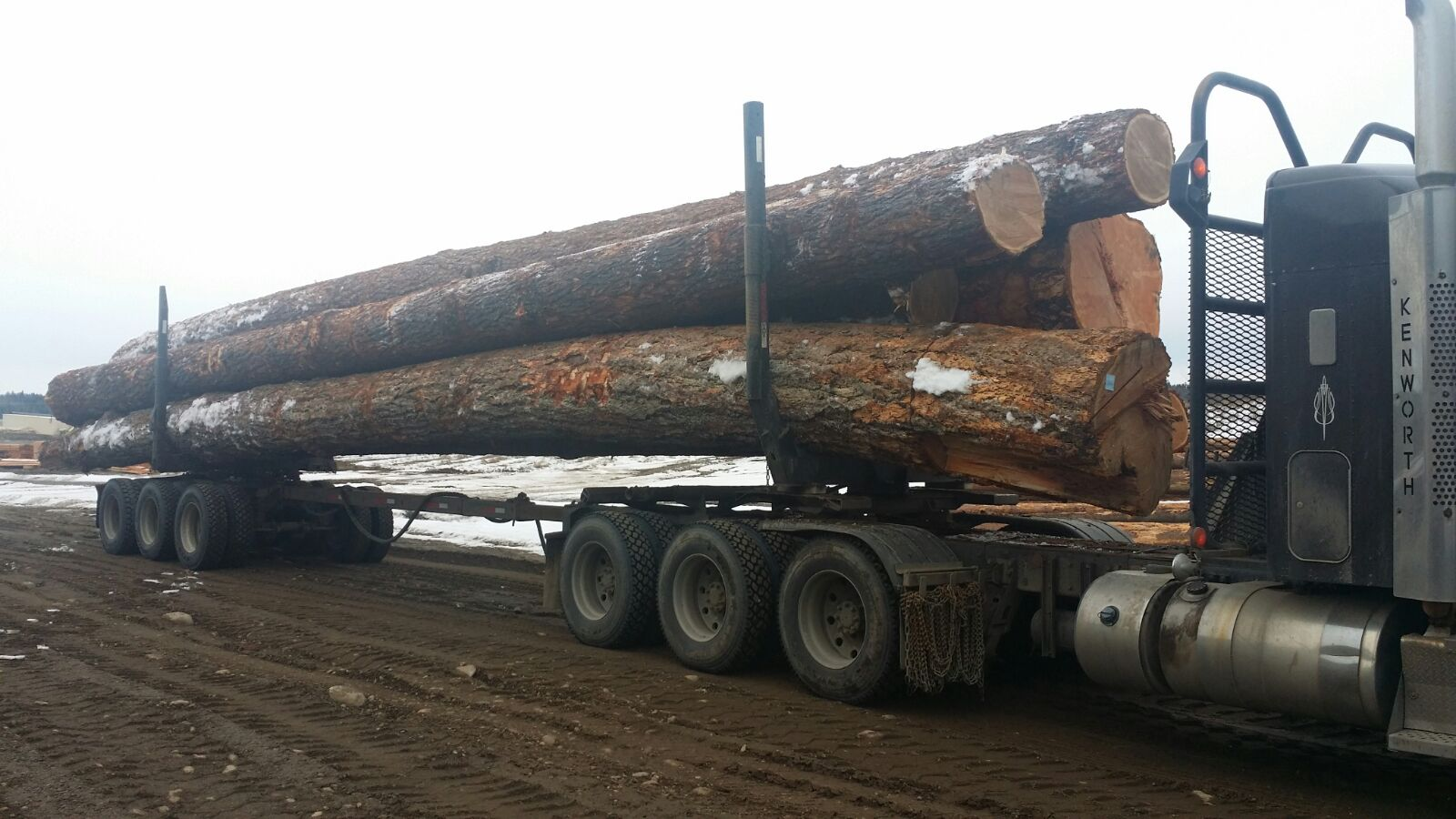 semi carrying logs